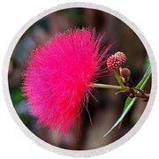 Red Mimosa Flower Round Beach Towel