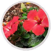 Tropical Hibiscus - Starry Wind 01 Round Beach Towel
