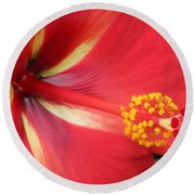 Tropical Hibiscus - Starry Wind 04 Round Beach Towel