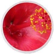 Tropical Hibiscus - Trinidad Wind 02 Round Beach Towel