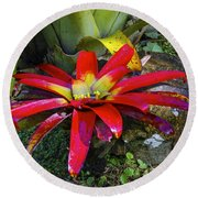 Tropical Plant Colors Round Beach Towel