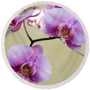 Tropical Radiant Orchid Flowers Round Beach Towel