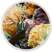 Tropical Wonderland - Banggai Cardinalfish Round Beach Towel