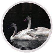 Trumpeter Swan Cygnets Round Beach Towel