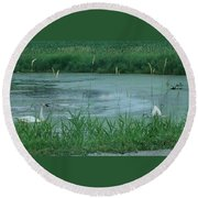 Trumpeter Swan Family Round Beach Towel