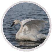 Trumpeter Swan - Profile Round Beach Towel