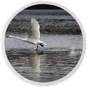 Trumpeter Swan Walking On Water Round Beach Towel