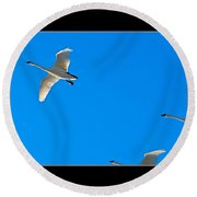 Trumpeter Swans In Color Round Beach Towel