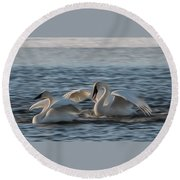 Trumpeter Swans Playing Tag Round Beach Towel