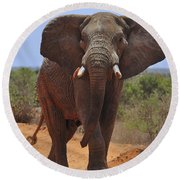 Tsavo Elephant Round Beach Towel
