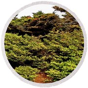 Tuckamore At Green Point Coastal In Gros Morne Np-nl Round Beach Towel