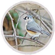 Tufted Titmouse - Baeolophus Bicolor Round Beach Towel