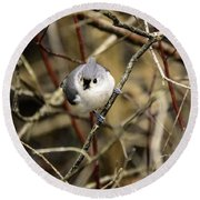 Tufted Titmouse On The Watch Round Beach Towel