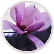 Tulip Tree Blooming Round Beach Towel