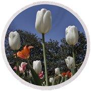 Tulips At Dallas Arboretum V36 Round Beach Towel