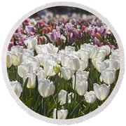 Tulips At Dallas Arboretum V52 Round Beach Towel