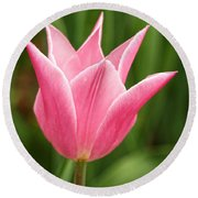 Tulips At Thanksgiving Point - 17 Round Beach Towel