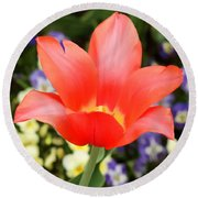 Tulips At Thanksgiving Point - 27 Round Beach Towel