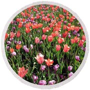 Tulips - Field With Love 56 Round Beach Towel