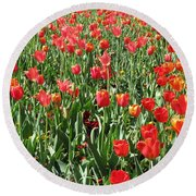 Tulips - Field With Love 61 Round Beach Towel