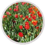 Tulips - Field With Love 62 Round Beach Towel