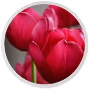 Tulips In The  Morning Light Round Beach Towel