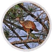 Turkey In A Tree Round Beach Towel by Al Powell Photography USA