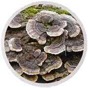Turkey Tail Bracket Fungi -  Trametes Versicolor Round Beach Towel