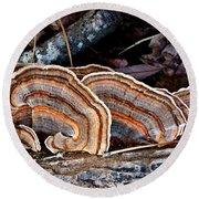 Turkey Tail Fungi In Autumn Round Beach Towel