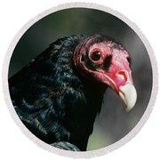 Turkey Vulture Cathartes Aura South Round Beach Towel