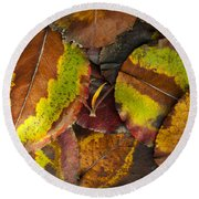 Turning Leaves 4 Round Beach Towel by Stephen Anderson