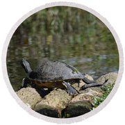 Turtle On A Raft Round Beach Towel