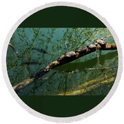 Seven Turtles In The Sun Round Beach Towel
