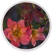 Tuscan Sun Rose Round Beach Towel