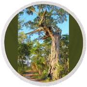 Twirling Tree Path Round Beach Towel