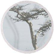 Twisted Tree 2 Round Beach Towel