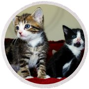 Two Adorable Kittens Round Beach Towel