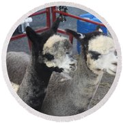 Two Alpacas Round Beach Towel