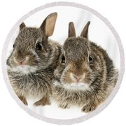Two Baby Bunny Rabbits Round Beach Towel