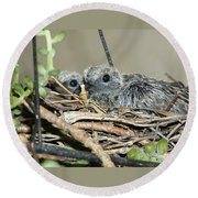 Two Baby Mourning Doves Round Beach Towel