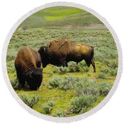 Two Bison Round Beach Towel