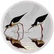 Two Black Neck Stilts Eating Round Beach Towel