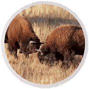 Two Bull Bison Facing Off In Yellowstone National Park Round Beach Towel
