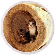 Two Cats In A Condo Round Beach Towel