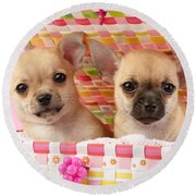 Two Chihuahuas Round Beach Towel by Greg Cuddiford