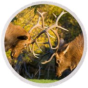 Two Elk Bulls Sparring Round Beach Towel by James BO  Insogna
