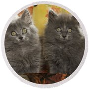 Two Fluffy Kittens Round Beach Towel