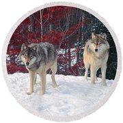 Two Gray Wolves Round Beach Towel