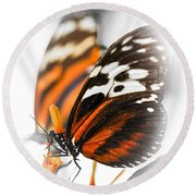 Two Large Tiger Butterflies Round Beach Towel