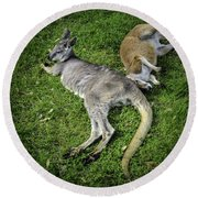 Two Lazy Kangaroos Lying Down Round Beach Towel